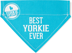 Best Yorkie by We Pets -